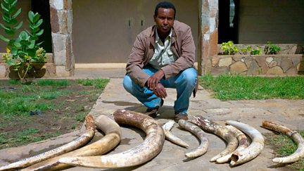 Ivory Wars: Out of Africa