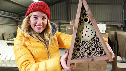 Hamster Wheel and Insect Hotel