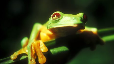 """The frogs were singing so loudly the sound was distorting my ears..."""