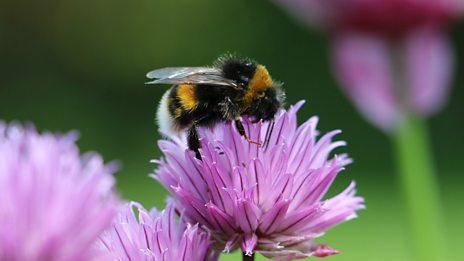 How do bumble bees actually fly!?