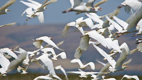 Experience an avian mass take-off from a Tunisian lake