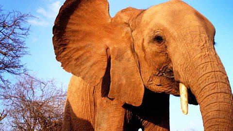 Elephant Diaries - Series 1: Episode 2