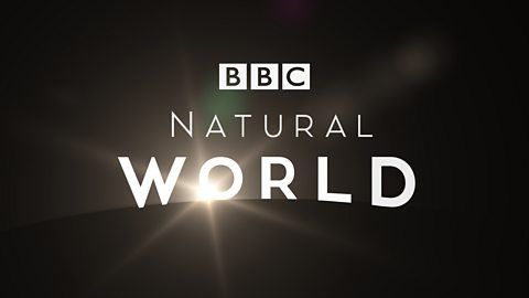 Natural World - 2012-2013 - Living With Baboons