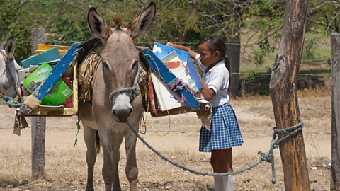 The donkey libraries of Colombia