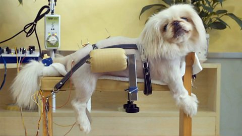 The bizarre things people buy for pets