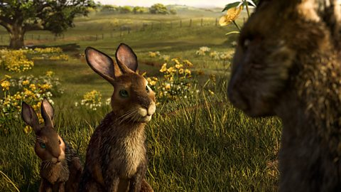 Bbc One Watership Down Two Part Version