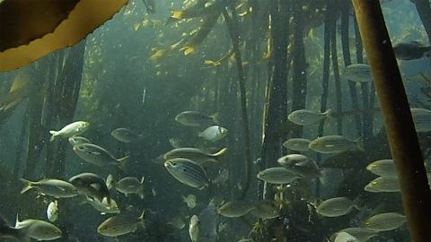 Secrets of an underwater forest