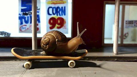 The miniature snail artists