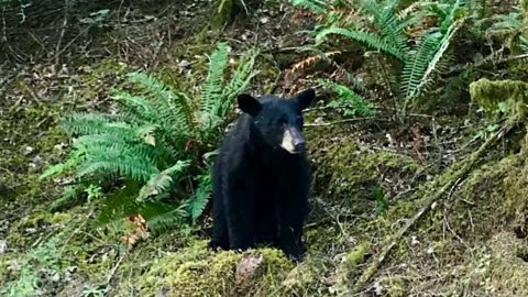 Young bear's tragic end in Oregon