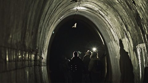 The Nazi tunnels rescuing wildlife