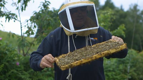 One man's extreme method of saving the bee population