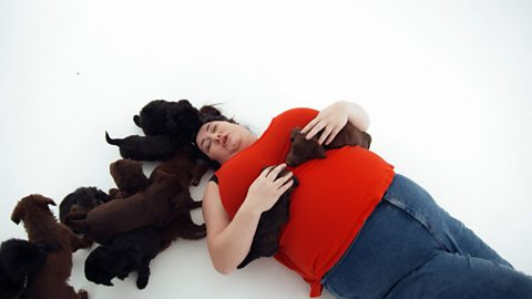 Truth or Mare: Puppy therapy reduces stress