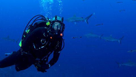 rijgen in laatst verschillende stijlen BBC Two - Great Barrier Reef