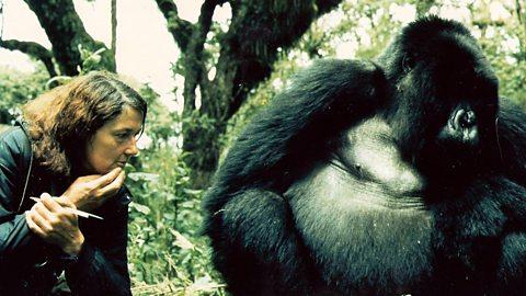 The Murder of Dian Fossey