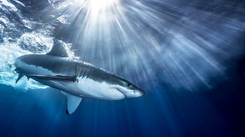 BBC One - Shark