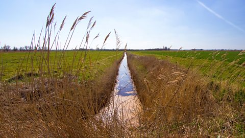 BBC Radio 4 - The Fens: Discovering England's Ancient Depths, Episode 2