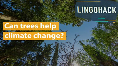 Can trees help climate change?