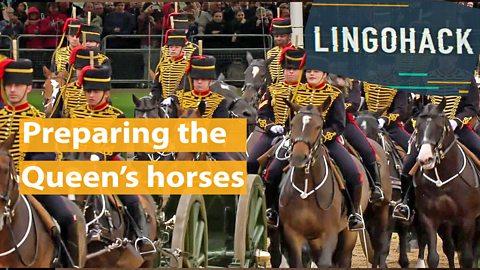 Preparing the Queen's horses