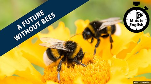 Is there a future without bees?