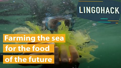 Farming the sea for the food of the future