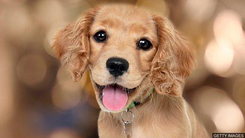 Puppy love 养狗不只是一种短暂的爱