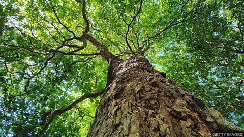 Clever trees 树木的生存智慧