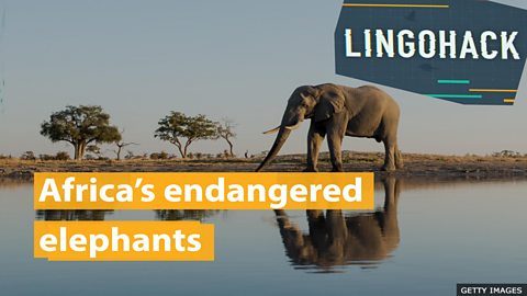 Africa's endangered elephants