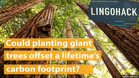 Could planting giant trees offset a lifetime's carbon footprint?