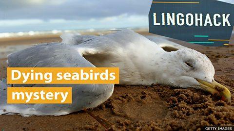 Dying seabirds mystery