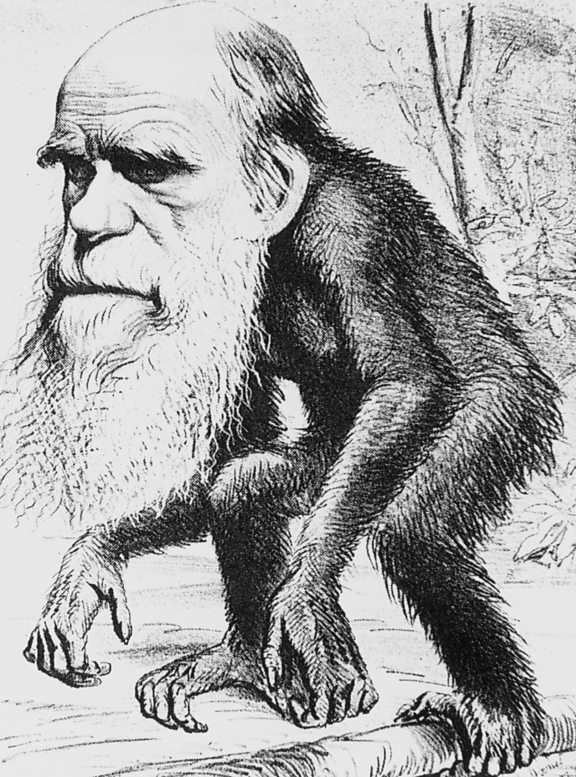 A cartoon of Darwin, showing him with the body of an ape.
