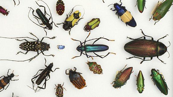 Darwin was an avid collector of beetles
