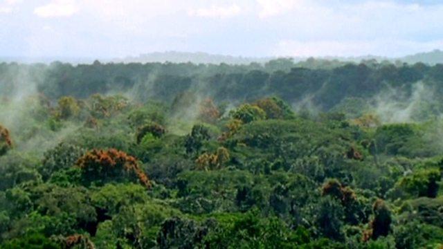 BBC Bitesize - KS3 Geography - Images of a tropical rainforest ...