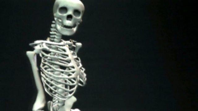 bbc bitesize - ks2 science - skeletons, Skeleton