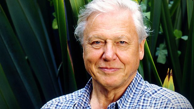 Gorillas Revisited with Sir David Attenborough