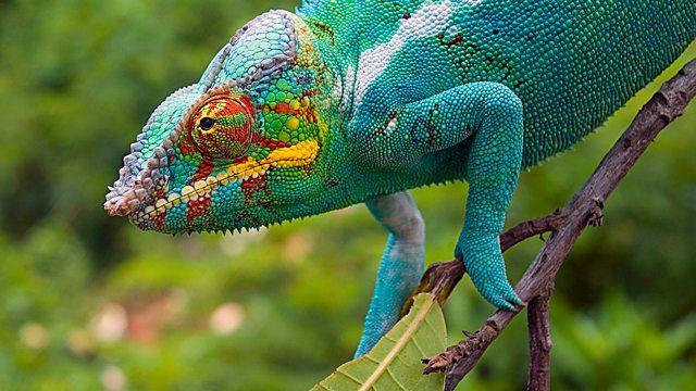 BBC Two - Madagascar, Island of Marvels