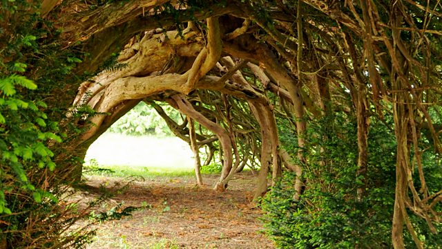 Bbc Radio 3 The Essay The Meaning Of Trees Series 1 Yew