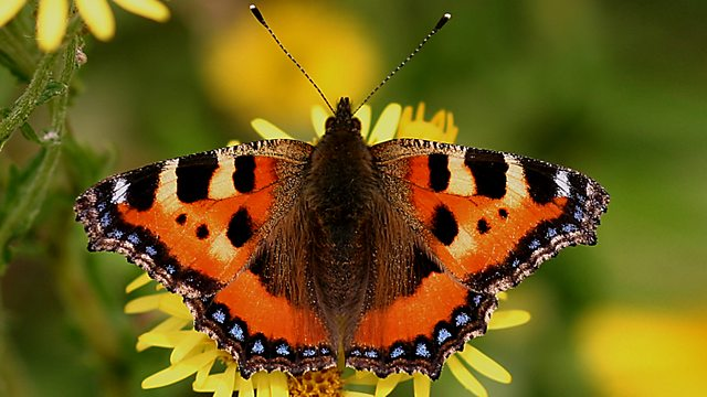 Springwatch Guide to Butterflies and Moths
