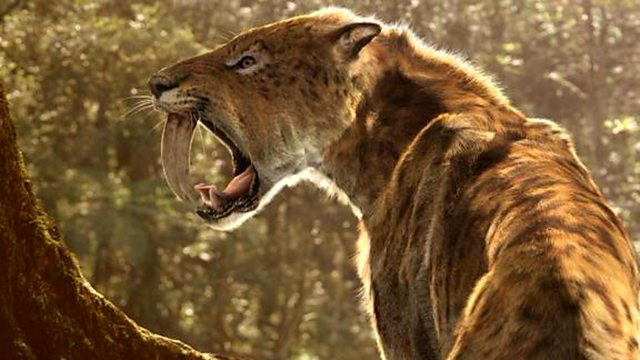 smilodon sabre tooth walking beasts