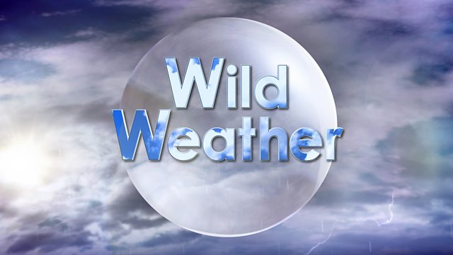 Image result for wild weather