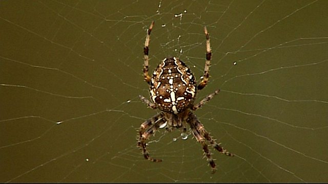 Spiders Eating Food Episodes