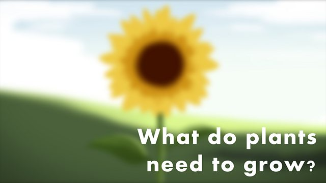 BBC Bitesize - KS1 Science - What do plants need to grow?