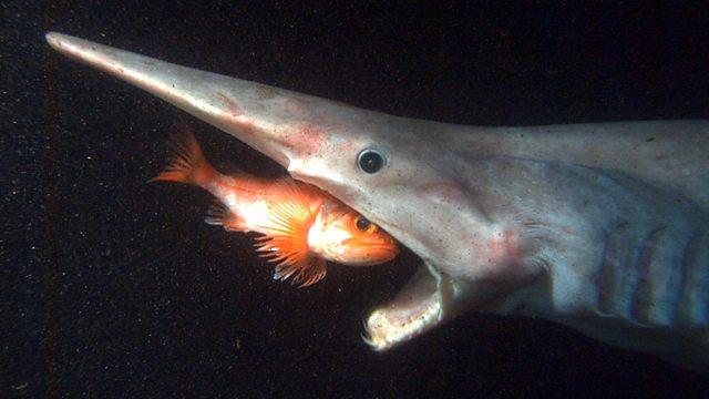 bbc four legends of the deep deep sea sharks