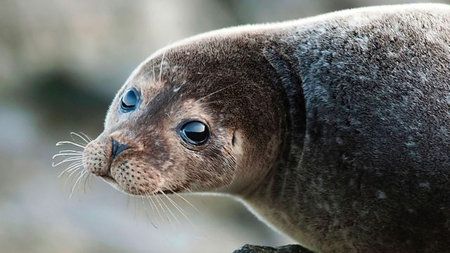bbc one big blue uk seals