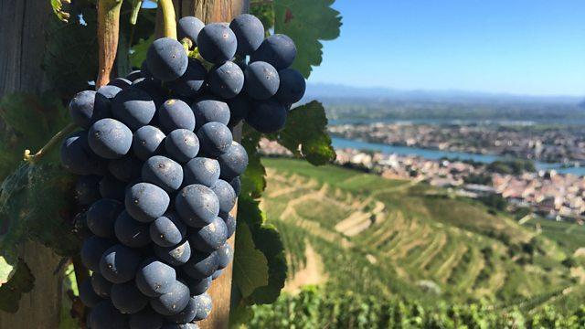 BBC World News - The Secret History of Shiraz Wine