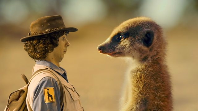 Andy and the Meerkats