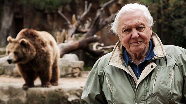 David Attenborough S Natural Curiosities Series