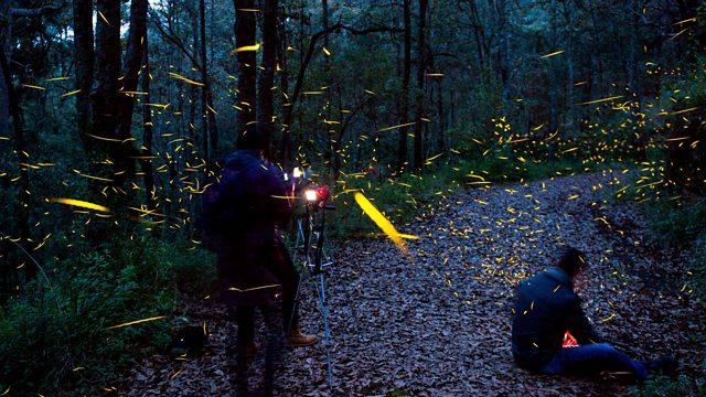 bbc world service the documentary the magic of fireflies