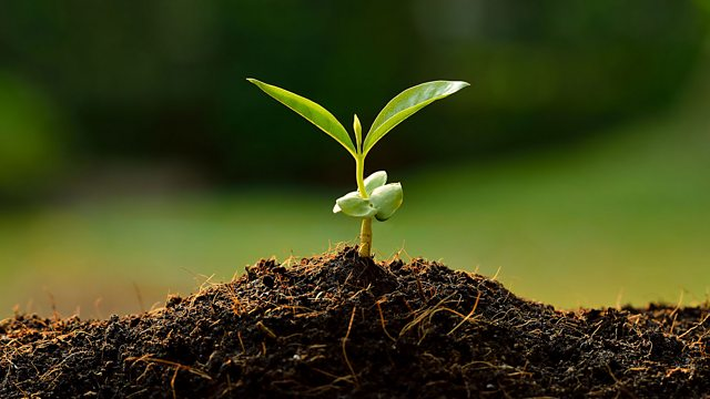 BBC World Service - CrowdScience, Is Soil The Secret to Slowing Climate  Change?