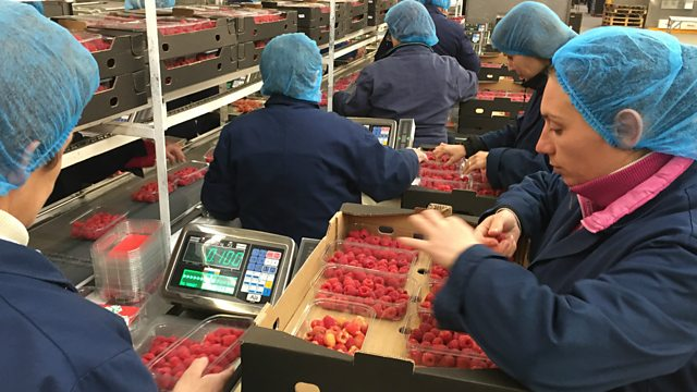 d7a0d44e5f6 BBC World Service - Global Business, Berries galore!