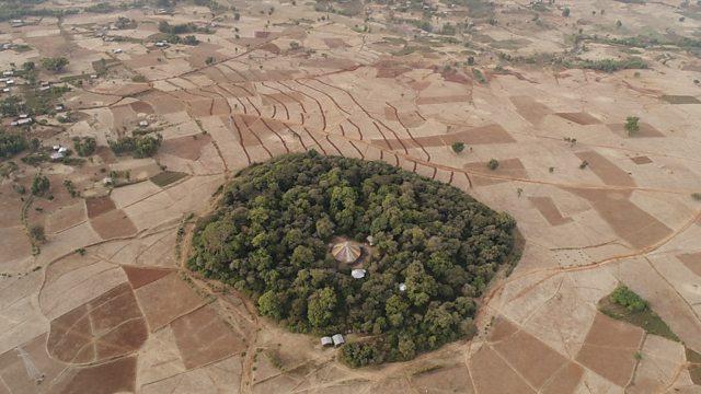 Ethiopian Church Forest